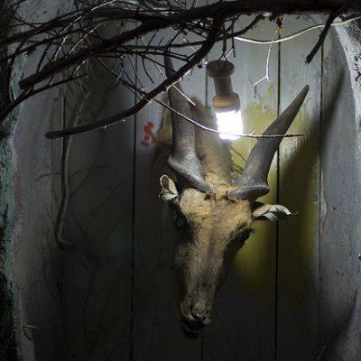 Qalqilya, el zoo más tétrico del mundo